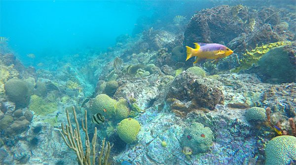 Underwater image Hart Bay, St John US Virgin Islands snorkeling