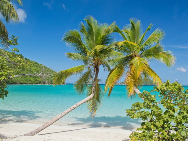 Maho Bay Beach, St John palm trees