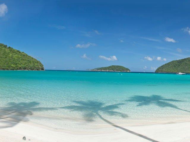 Maho Bay Beach, St John palm trees